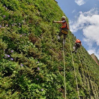 Installation of a Green Wall