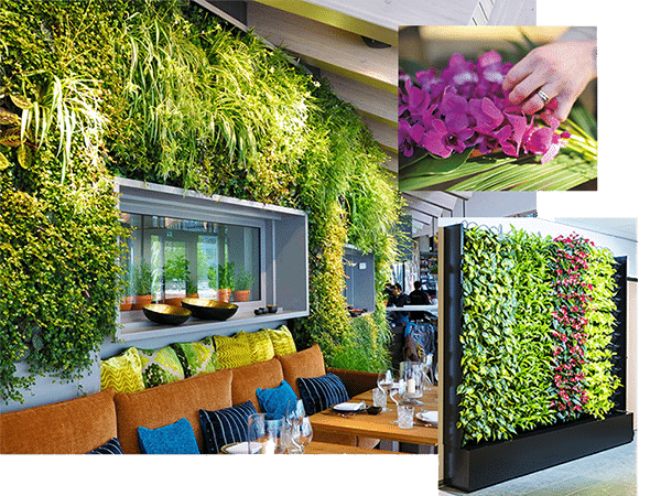 live green wall in restaurant